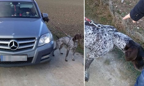 Woman walks dog while sitting in her Mercedes