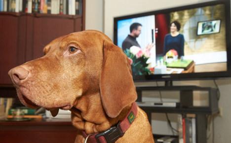 Janosch the dog gets TV licence bill