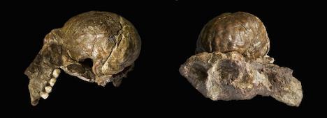 Early ancestor's hands were 'human'