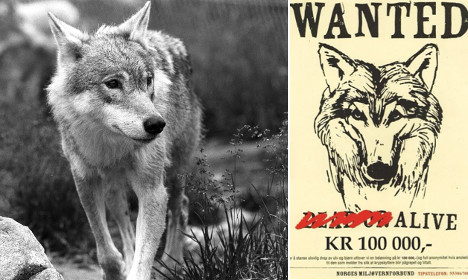 Green warriors put bounty on wolf hunters