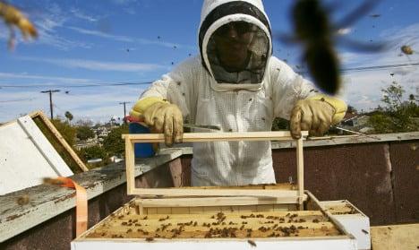 Urban Swedes flock to beekeeping trend