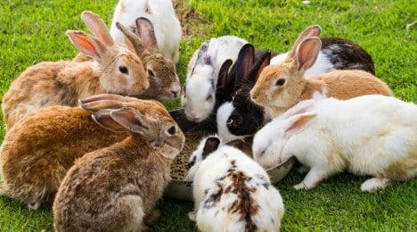 Police find 104 rabbits in Stuttgart flat