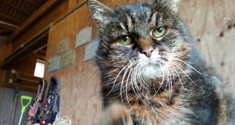 Is Sweden's Missan the world's oldest living cat?