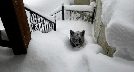 Intrepid bear cub turns up on snowy doorstep