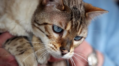 Cat's bricked-in ordeal ends after 27 days