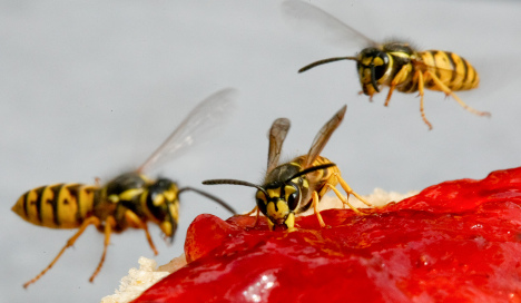 Munich ice shop faces €10,000 wasp sting