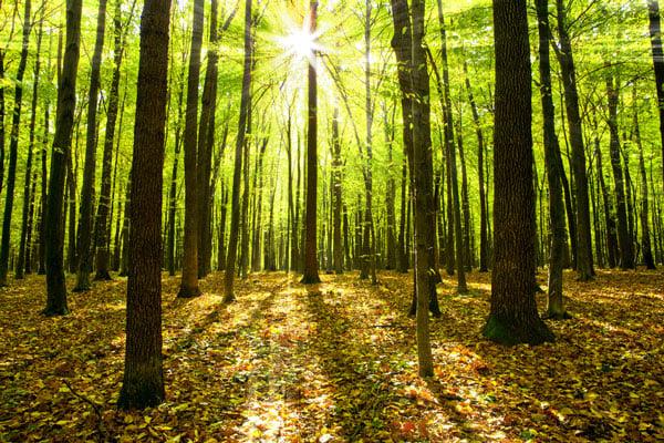 Court rules in drunken tree chopping case