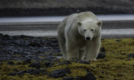 Arctic site to aid studies amid climate change