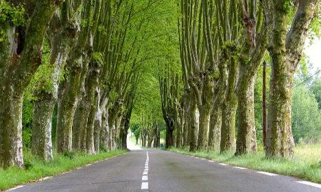 France's famed roadside trees could face chop