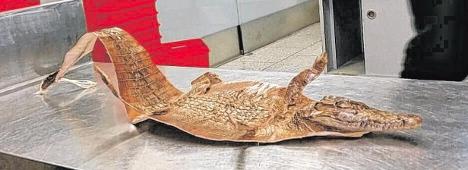 Dear Mum: please enjoy this dead crocodile