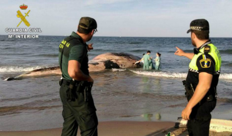 Six tonne whale washes up on Valencia beach