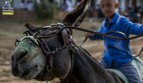 Horse deaths reveal dark side of Rocio pilgrimage