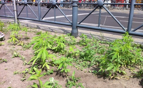 Police seize weed growing at Berlin station