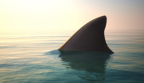 Magaluf 'shark' terrifying tourists was tuna fish