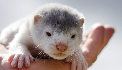Norway to slash subsidies for fur farmers