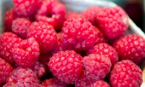 Frozen berries confirmed as deadly bug source