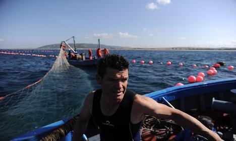Ancient technique still nets world's best tuna