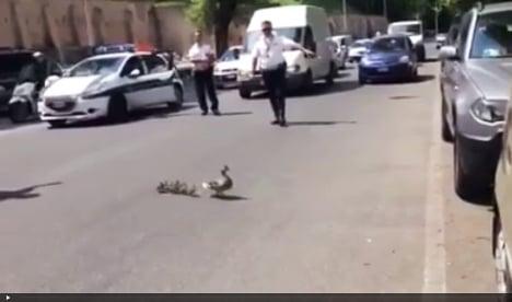 VIDEO: Rome police help ducks cross busy road