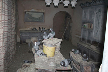 Hoarder found with hundreds of pigeons