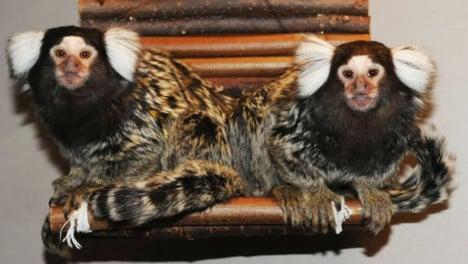 Stolen monkeys returned to Oslo reptile park