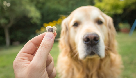 Postmen given dog treats for protection