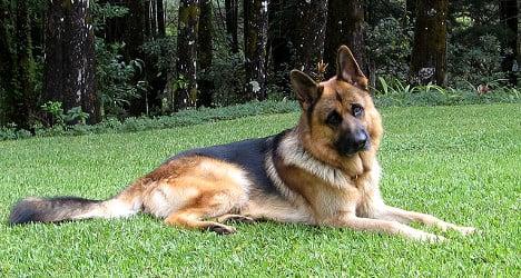 Family dog kills three-year-old girl