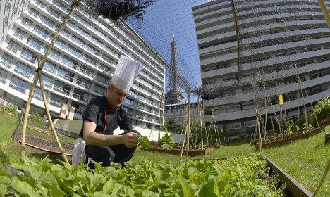 Paris chefs embrace rooftop gardens