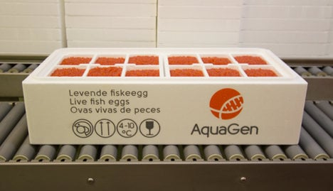 Norway sells salmon eggs to North Korea