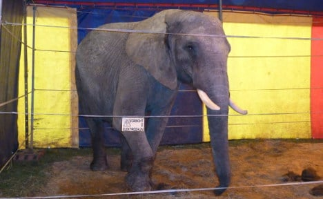 Circus owner: activists freed killer elephant