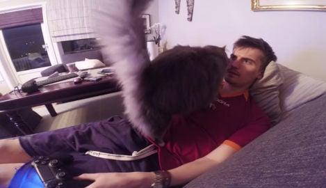 Norway cat video wins YouTube glory