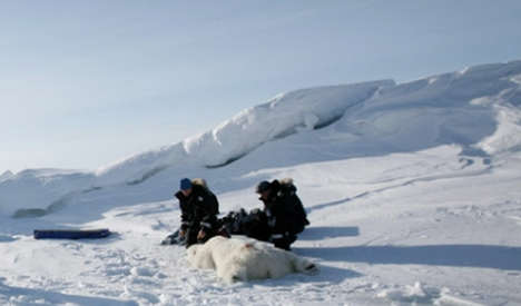 Norway polar bear puts dolphin in the freezer
