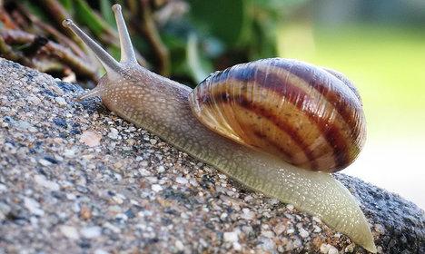 Snail slime: Italy's latest beauty craze