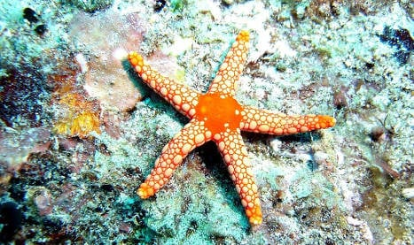 Starfish find could lead to 'fountain of youth'