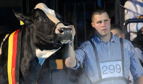 Lady Gaga named Germany's prettiest cow