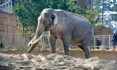 Copenhagen Zoo animals are too fat