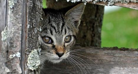 Missing Swiss cats spark record helpline calls