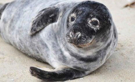 Surprise: Norwegian man hauls in seal not fish