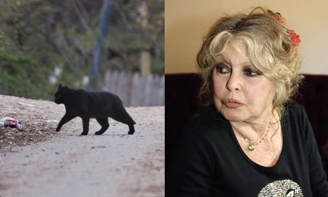 Bardot blasts Australia's plan to slay wild cats