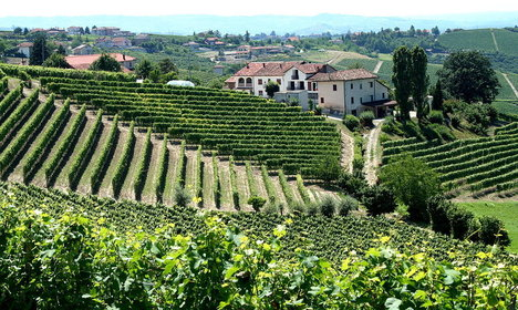 Chinese are quaffing more Italian wine