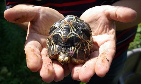 France to return 150 tortoises to Madagascar
