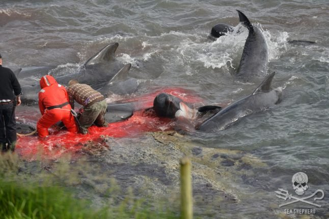 Faroe court convicts five anti-whaling activists