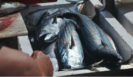 Mediterranean fish caught in Oslo fjord