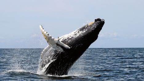 Slash CO2 emissions to save oceans: scientists