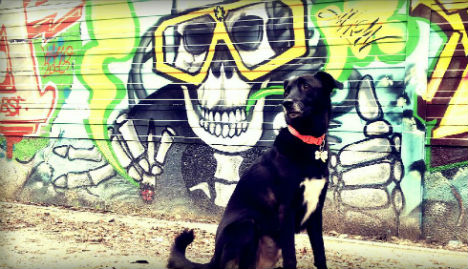 Spanish city to use DNA to trace dog poo culprits