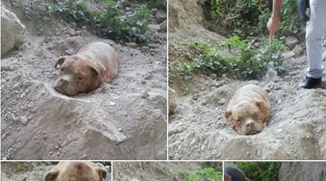 Dog buried alive sparks French social media fury