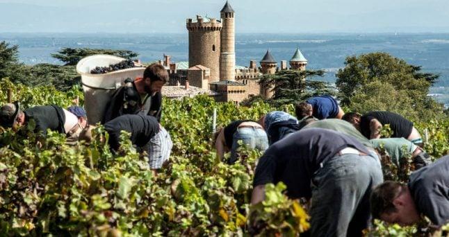 Summer heat to shrivel French wine production