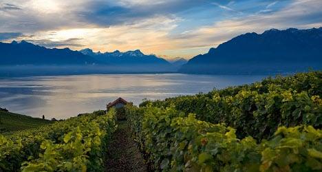 Industry fears for Swiss wine's market share