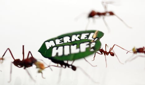 Half a million ants march for rainforest protection