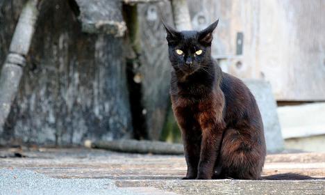 'Massacre' of black cats shocks Marseille locals
