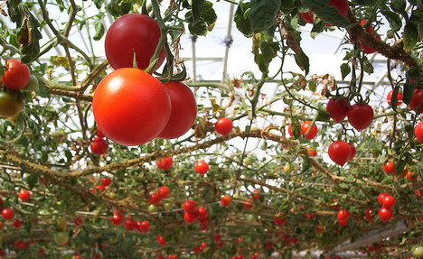 Italy's tomato startup that saves migrants